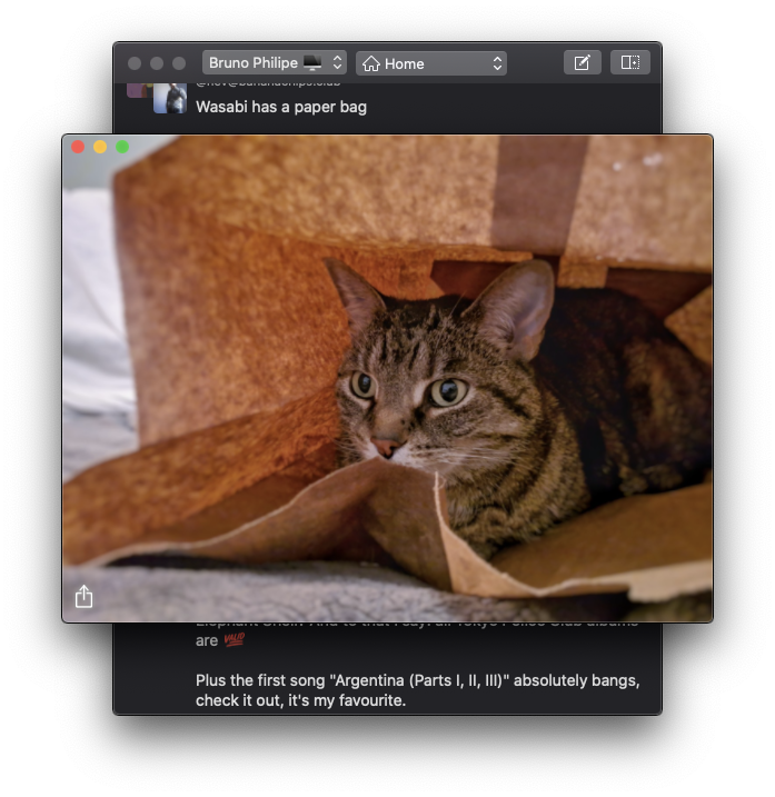 Screen shot of image attachment window displaying a large image
